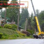 Cheapest Time of Year for Tree Removal That Saves Money